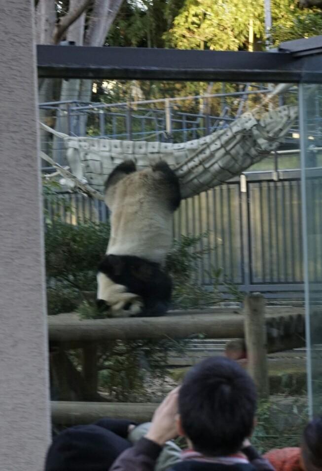 上野動物園パンダ