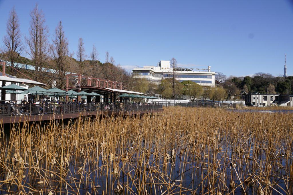 上野動物園不忍池テラス