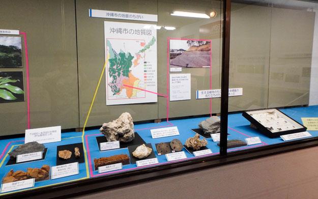 沖縄市立郷土博物館企画展 沖縄市の自然 やんばるの入り口