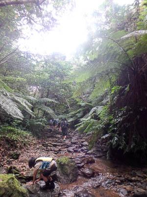 羽地ダムカヌー体験 ジャングルの清流