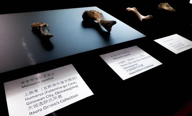 風樹館企画展琉球の両生・爬虫類
