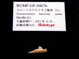 風樹館企画展琉球の両生・爬虫類-ヨロントカゲモドキ上顎骨