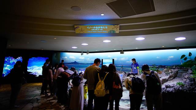 子供と行く!初めての美ら海水族館 タッチプール