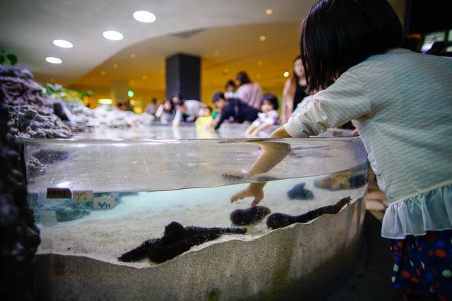 子供と行く!初めての美ら海水族館 タッチプールの奥は水深が浅い