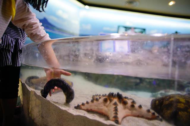 子供と行く!初めての美ら海水族館 生き物は水から出さないようにご注意!