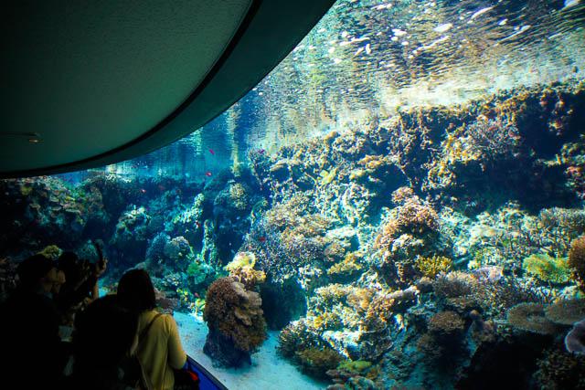 子供と行く!初めての美ら海水族館 サンゴの海