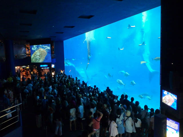 子供と行く!初めての美ら海水族館 ジンベエザメが立つ食事シーン