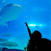 子供と行く!初めての美ら海水族館