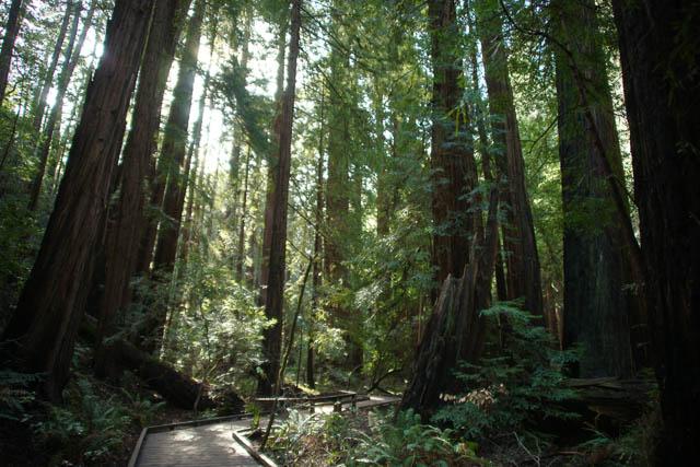 Muir Woods(ミュアウッズ国定公園)