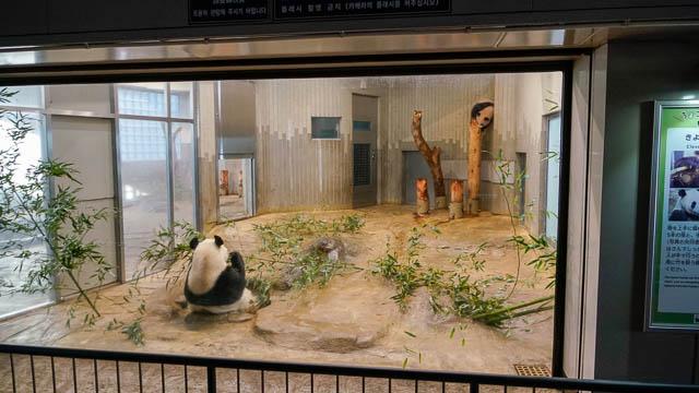 シャンシャン当選!上野動物園にパンダに会いに行ってきた!2月からは整理券制の先着順
