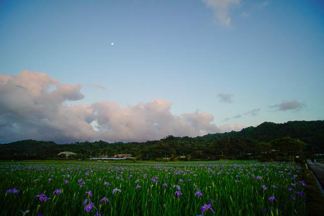 【2018/3/28】咲いています!大宜味村喜如嘉のオクラレルカ開花情報と工芸展「第15回いぎみてぃぐま」の開催案内