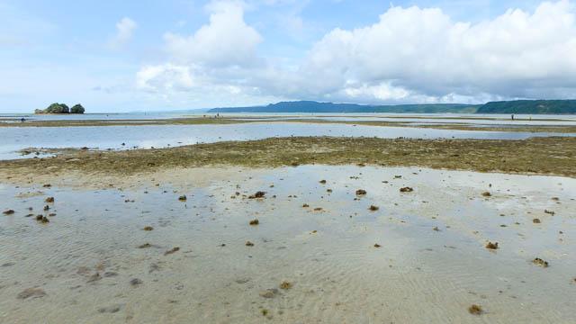 【初夏のやんばる】大潮の日は屋我地島周辺のモズク採りと潮干狩りがオススメ