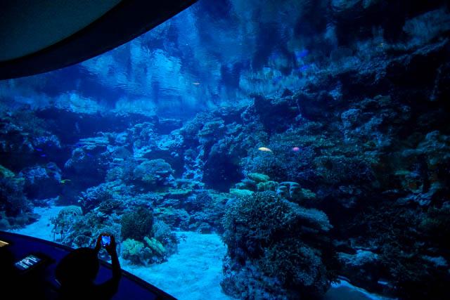 夜の美ら海水族館・ナイトアクアリウム(2018)に行ってきました
