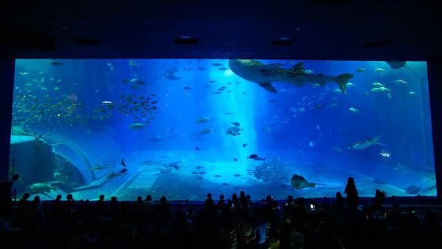冬休みも開催!夜の美ら海水族館・ナイトアクアリウムとイルミネーションを楽しもう(2018-2019)