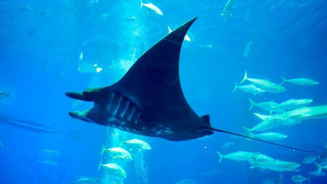 子供と行く!初めての美ら海水族館【最新2017年版~更新中】